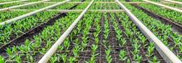 Constructeur batiments maraichers agricole