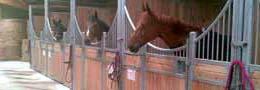 Constructeur spécialiste des boxes interieurs pour chevaux